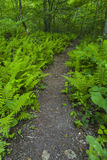 Ferns & Wildflowers, Greenbrier, Great Smoky Mountains NP Stock Photo
