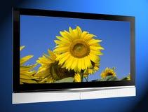 Fernsehapparat mit Sonnenblume auf Bildschirm stockfotografie