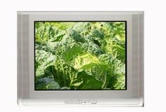 Fernsehapparat und freie Kohlbildschirmanzeige Stockfoto