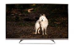 Fernsehen - modernes Fernsehen der Entschließung 4K Lizenzfreies Stockbild