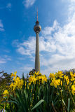 Fernsehturm Berlin. Germany. Fernsehturm Berlin TV Tower against the blue sky. Flowering yellow daffodils in the foreground Royalty Free Stock Images