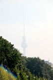 Fernsehturm Berlin TV Tower from Gro�er Tiergarten Stock Photos