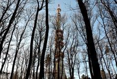 Fernsehturm hinter den Bäumen Lizenzfreies Stockfoto