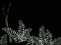 fernsskog Arkivbild