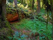 Fernview skog arkivbilder