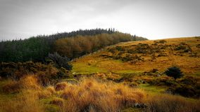 Free Fernworthy Forest, Chagford, DartmoorNationalPark, Devon Uk Stock Image - 133889641