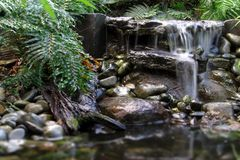 Ferny Falls Stock Image