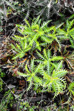 Ferny green Royalty Free Stock Photography