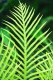 ferny leaves Royaltyfri Fotografi