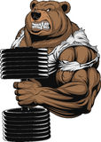 Ferocious Bear athlete. Vector illustration, a ferocious bear the athlete performs the exercise for biceps with dumbbells Royalty Free Stock Image