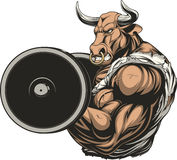 Ferocious bull with a barbell Stock Image