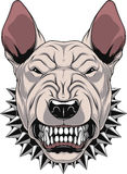 Ferocious bullterrier head. Vector illustration Angry bullterrier mascot head, on a white background Stock Photography