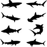 Ferocious deep-sea sharks. Is the King, is the largest fish Royalty Free Stock Photo