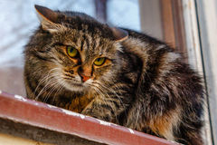 A ferocious, evil cat on the windowsill on the street. Angry, mi. Strustful cussing cat. The cat looks maliciously, incredulously Stock Image