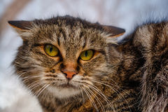 A ferocious, evil cat on the windowsill on the street. Angry, mi. Strustful cussing cat. The cat looks maliciously, incredulously Royalty Free Stock Images