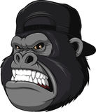 Ferocious gorilla in a cap. Vector illustration, Ferocious gorilla in a cap, on a white background Royalty Free Stock Photo