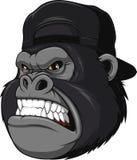 Ferocious gorilla in a cap Royalty Free Stock Photo