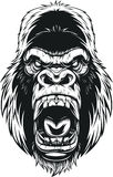 Ferocious gorilla head. Vector illustration, ferocious gorilla head on background Stock Photos