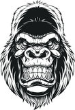 Ferocious gorilla head. Vector illustration, ferocious gorilla head on white background Royalty Free Stock Photos