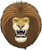 Ferocious lion  head. Vector illustration of a head fierce lion on a white background Stock Photo