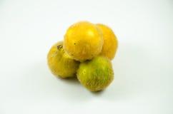 Ferox Solanum Стоковые Изображения