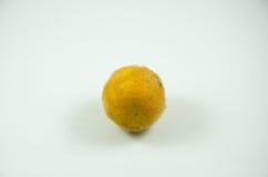 Ferox Solanum Стоковая Фотография RF