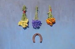 A ferradura oxidada do símbolo da sorte e a erva médica florescem o grupo na parede azul fotos de stock royalty free