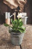 Ferramenta de jardim, pá, ancinho, lata molhando, cubeta, tabuletas para o pla Imagem de Stock