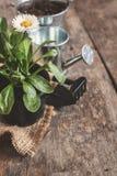 Ferramenta de jardim, pá, ancinho, lata molhando, cubeta, tabuletas para o pla Imagens de Stock
