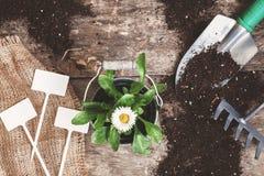 Ferramenta de jardim, pá, ancinho, lata molhando, cubeta, tabuletas para o pla Fotos de Stock