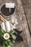 Ferramenta de jardim, pá, ancinho, lata molhando, cubeta, tabuletas para o pla Fotografia de Stock Royalty Free
