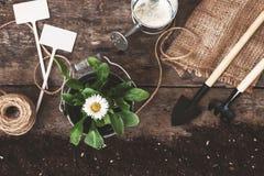 Ferramenta de jardim, pá, ancinho, lata molhando, cubeta, tabuletas para o pla Fotografia de Stock