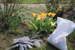 A ferramenta do estripador, mineral granulou o adubo e as luvas estão em tulipas de florescência próximas do jardim na mola Imagem de Stock Royalty Free