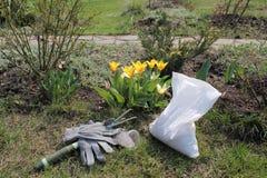 A ferramenta do estripador, mineral granulou o adubo e as luvas estão em tulipas de florescência próximas do jardim na mola Fotos de Stock Royalty Free