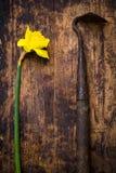 Ferramenta do narciso e da exploração agrícola Foto de Stock Royalty Free