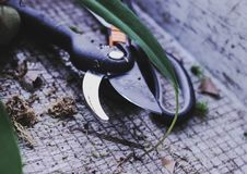Ferramentas de jardim cortador, tesouras flores de transplantação na mola fotos de stock