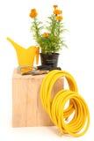 Ferramentas de jardim do Marigold Imagem de Stock Royalty Free