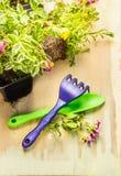 Ferramentas de jardinagem: colher e ancinho com planta da vegetação rasteira Fotos de Stock