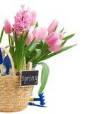 Ferramentas de jardinagem com jacinto e tulipas Fotos de Stock Royalty Free