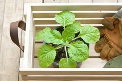 Ferramentas de jardinagem na caixa de madeira Imagem de Stock Royalty Free