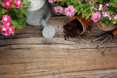 Ferramentas de jardinagem novas, bandeja do bastão Fotos de Stock