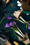 Ferramentas de jardinagem, potenciômetros da turfa, flor do açafrão Mola Fotos de Stock Royalty Free