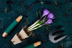 Ferramentas de jardinagem, potenciômetros da turfa, flor do açafrão Mola Imagens de Stock Royalty Free