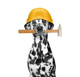 Ferramentas de terra arrendada do construtor do cão em sua boca Imagens de Stock Royalty Free
