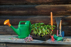 Ferramentas e equipamento de jardinagem Imagens de Stock Royalty Free