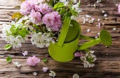 Ferramentas e ervas exteriores de jardinagem Imagem de Stock