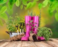 Ferramentas e ervas exteriores de jardinagem Fotos de Stock Royalty Free