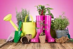 Ferramentas e ervas exteriores de jardinagem Fotografia de Stock