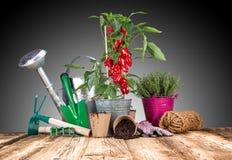 Ferramentas e ervas exteriores de jardinagem Imagem de Stock Royalty Free