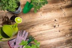 Ferramentas e ervas exteriores de jardinagem Imagens de Stock